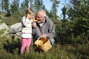 little girl and her grandpa enjoying their chanterelle harvest in sunny forest
